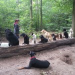 Hundetraining Gassiservice Berlin