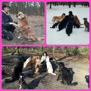 Gassi Service berlin Hundebetreuung mit Herz und verstand